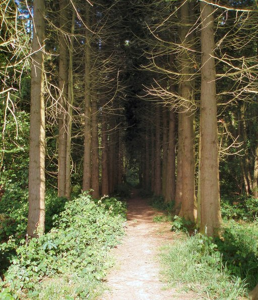 Avenue of trees - geograph.org.uk - 443617