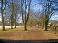 Avenue of trees at the park - geograph.org.uk - 1714331.jpg