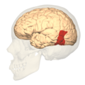 BA37 - lateral view.png