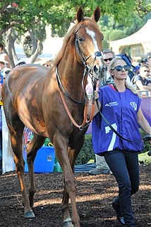 Ulysses (horse) Irish-bred Thoroughbred racehorse