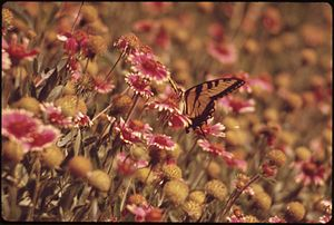 Carrollton, Texas - Butterfly and wildflowers at Elm Fork Nature Preserve