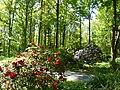 Bad Sassendorf – Kurpark - Rhododendronpark am 6. Mai 2016 - panoramio - giggel (2).jpg