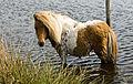 Badderen bij de 'Paardenbegrazing'.jpg
