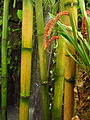Bambus IMG 0230.JPG