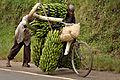 Banana-bike.jpg