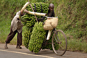 Men in Uganda using a bicycle to transport bananas Banana-bike.jpg