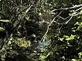 Banat,Nera Canyon - panoramio (68).jpg