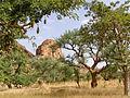 BaobabsMali 02.JPG