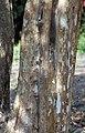 Bark I IMG 3282.jpg