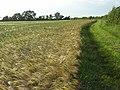 Barley, Stoke Lyne - geograph.org.uk - 866677.jpg