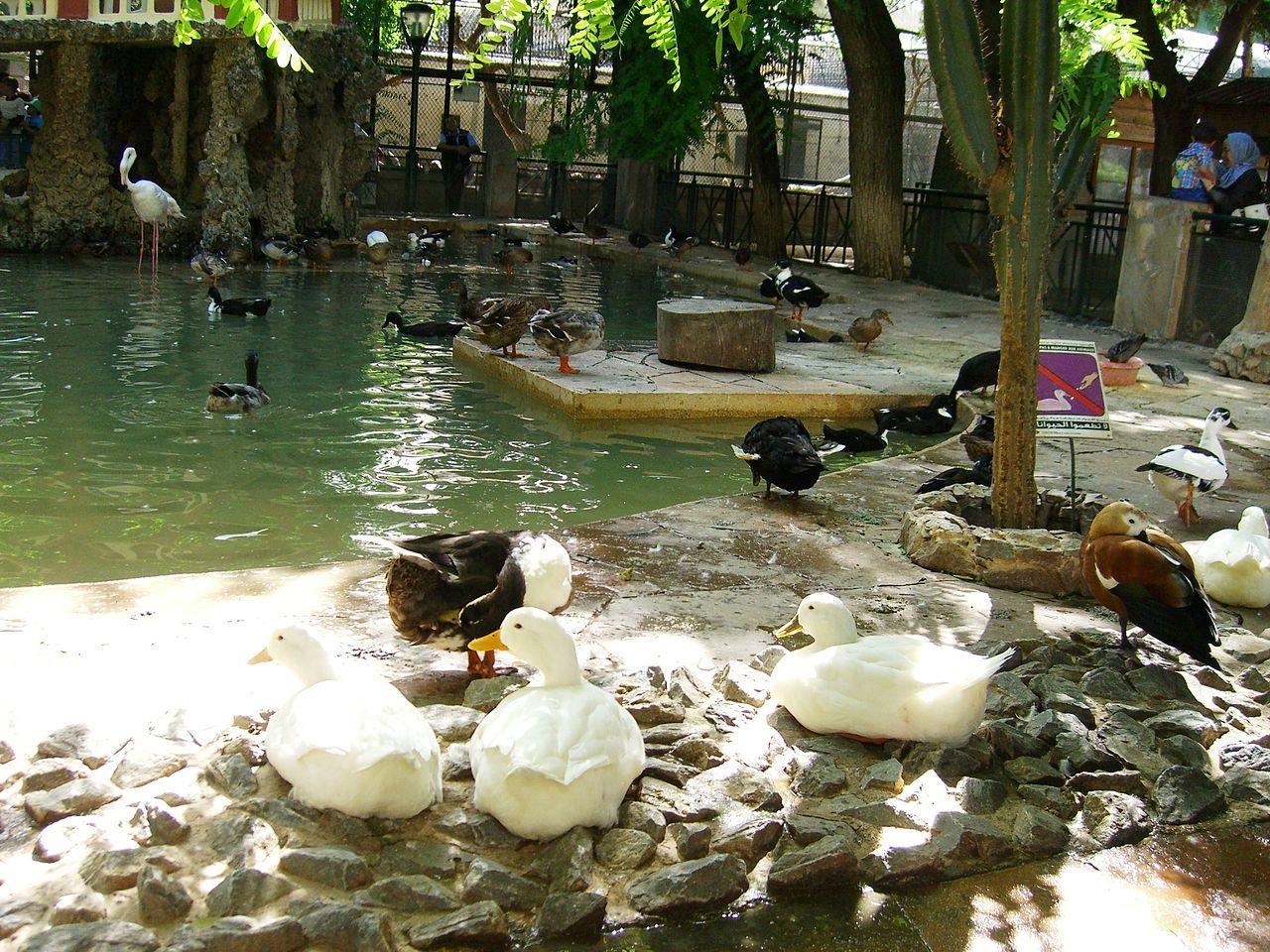 File bassin des palmip des jardin d 39 essai el hamma for Jardin d essai alger