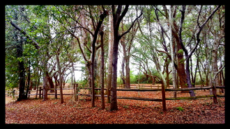 Battle of Secessionville - Secessionville Battlefield