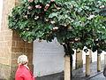 Baum mit Blüten (2).JPG