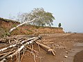 Beach Kama reservoir.Берег Камского водохранилища - panoramio (1).jpg