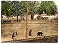Bear pit, Berne, Switzerland-LCCN2001701111.jpg