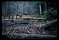 Beaver pond and dam. 21979. slide (eafddb69d6194298a7bfcda800b36a9e).jpg