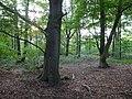 Bedburg-Hau Berk'sche Straße Moyländer Wald PM18-01.jpg