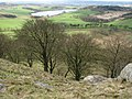 Beeches, Cockleroy - geograph.org.uk - 157864.jpg