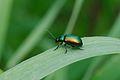 Beetle (7735172570).jpg
