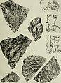 Beiträge zur Paläontologie und Geologie Österreich-Ungarns und des Orients - Mitteilungen des Geologischen und Paläontologischen Institutes der Universität Wien (1913) (20336275926).jpg