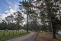 Belanglo NSW 2577, Australia - panoramio (18).jpg