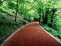 Belgrad Ormanı... - panoramio.jpg