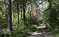 Bike trail between Grabacz and Kopaniarze - panoramio (1).jpg