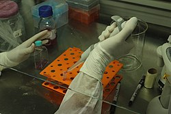 Biologist using pipette 01.jpg