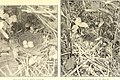 Bird homes - the nests, eggs and breeding habits of the land birds breeding in the eastern United States; with hints on the rearing and photographing of young birds (1902) (14568863747).jpg