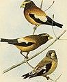 Bird lore (1911) (14568625139).jpg