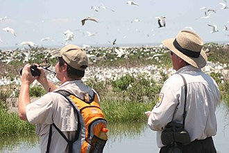 Wildlife observation - Birdwatchers on a beach