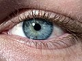 Blue-Green Eye miosis.jpg