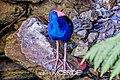 Blue Bird (95752587).jpeg