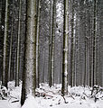 Bois Jacques near Foy (5270477879).jpg