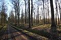 Bois de la Louvière - Livierenbos, Flobecq - Vloesberg 23.jpg
