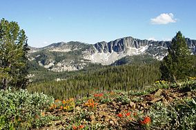 A photo of mountains and Indian paintbrush in Boise National Forest