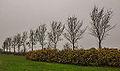 Bomengroep om strandje put van Nederhorst 03.jpg