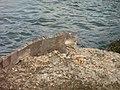 Bonaire M0010596 (2085293442).jpg