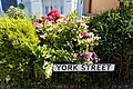 Border shrubs on York Street Broadstairs Kent England.jpg