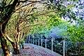 Bosque Municipal de Marília-SP, BRASIL.jpg
