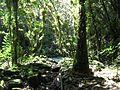Bosque cubano El Nicho.jpg