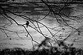 Botanical Garden80.jpg