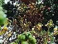 Botanical Garden (Ooty).jpg