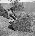 Breme od daleč zakljukano, Primorska 1959.jpg