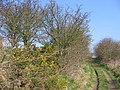 Bridleway To Kilham - geograph.org.uk - 378557.jpg