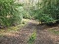 Bridleway descending into Hammonds Wood - geograph.org.uk - 1258390.jpg