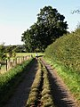 Bridleway near Hayleigh Farm - geograph.org.uk - 1471704.jpg