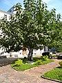 Bucuresti, Romania. MUZEUL COLECTIILOR DE ARTA. PALATUL ROMANIT. (exterior cu copac) (B-II-m-B-19862).jpg