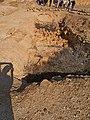 Buried Vaults, Nitzana, Negev, Israel קמרונות קבורים, ניצנה, רמת הנגב - panoramio (1).jpg
