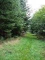 Burleydown Woods - geograph.org.uk - 246352.jpg